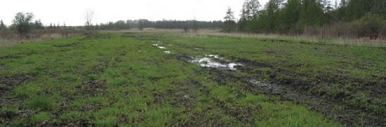 Fox River Wetland Ditch Filled