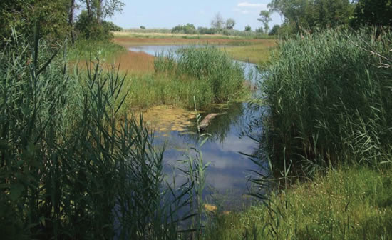 Northern Pike Habitat In Little Suamico Watershed