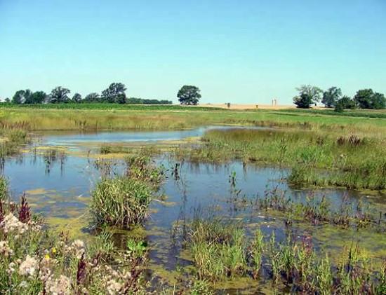 Schmidt wetland restoration