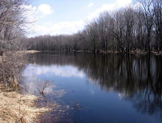 Habitat Preservation in the Herb Behnke Unit, Wolf River Bottoms Natural Resource Area
